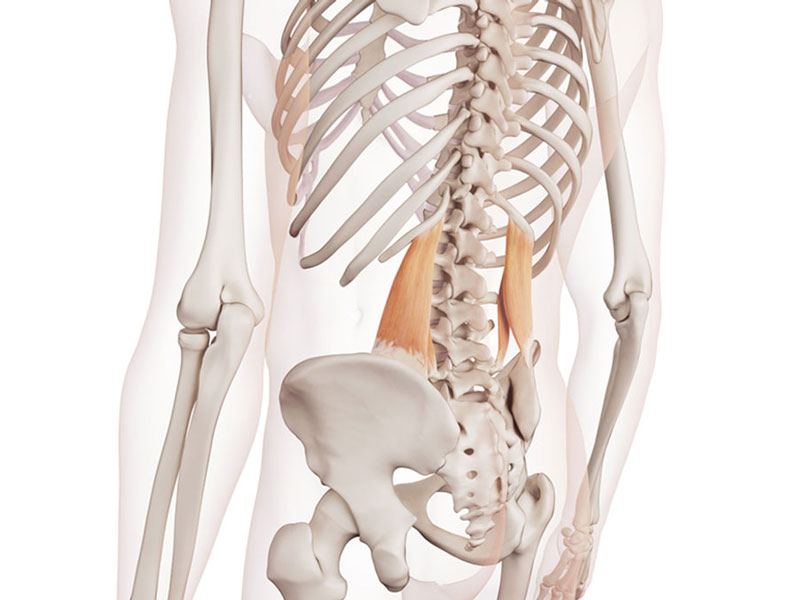 Mobilize This Muscle to Loosen Up Your Back - MoveU