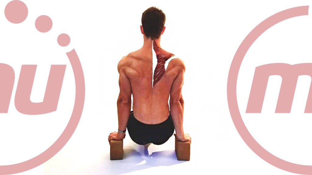 Understanding Back Muscle Spasms