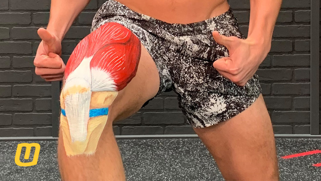 Why Does My Knee Hurt?