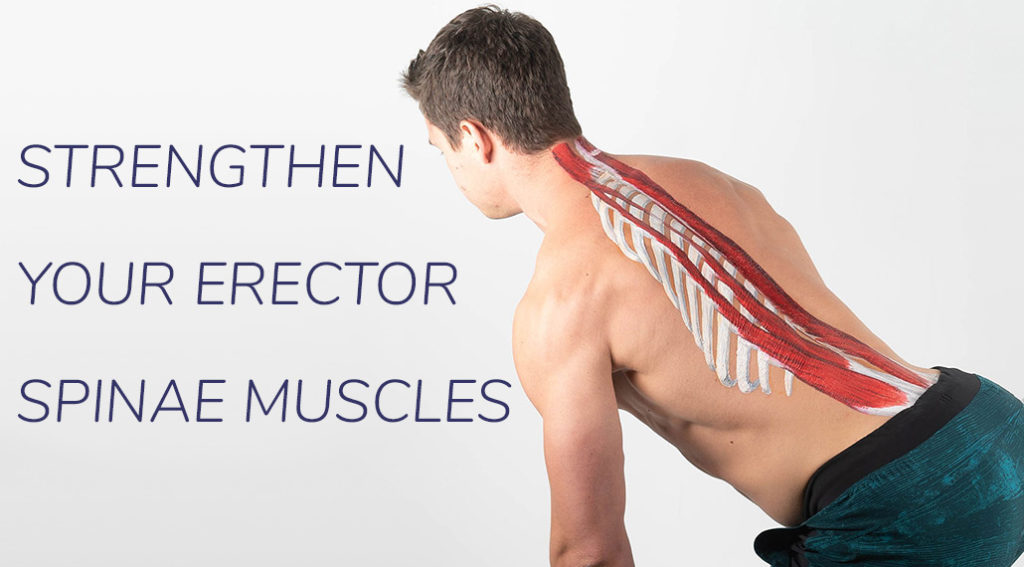 How to Strengthen Your Erector Spinae Muscles