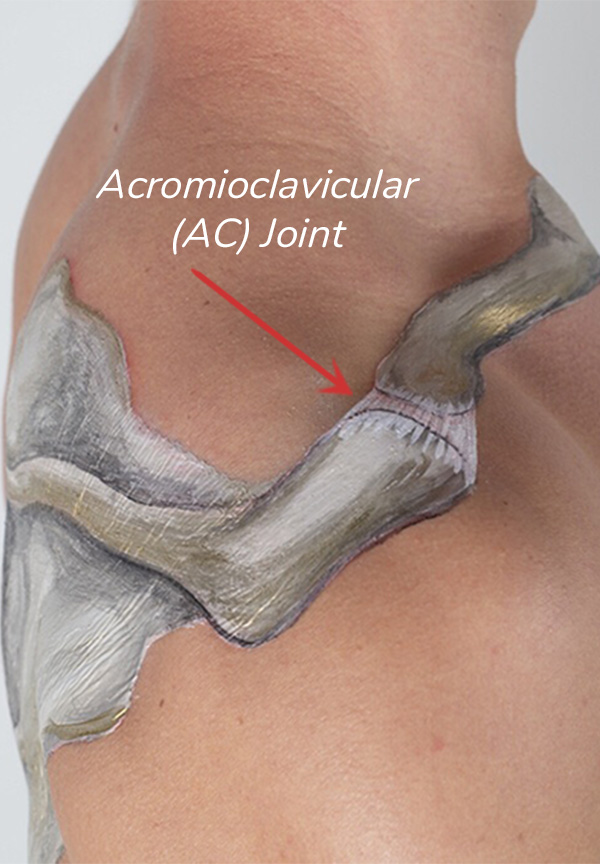 The AC Joint